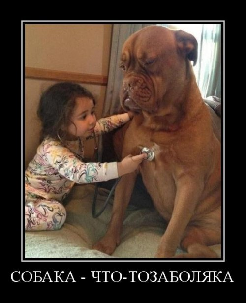 Собаки - демотиваки