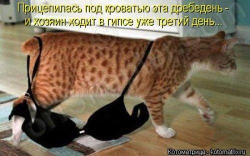 Новые котоматрицы (30 шт)