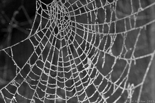 Десять самых распространённых мифов о пауках