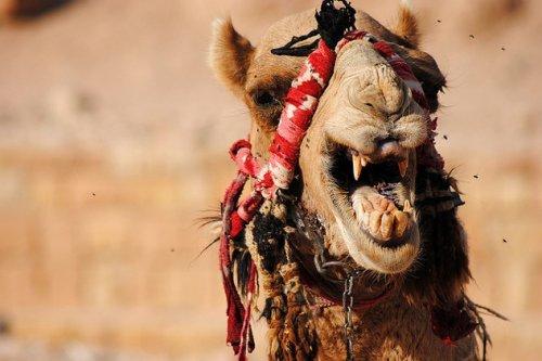 10 Животных с ужасающими зубами