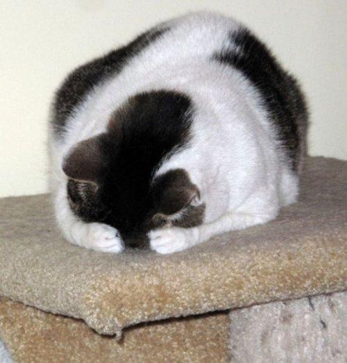 Кошачьи прятки (39 фото)