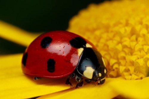 Топ-10: Фотографии миловидных насекомых