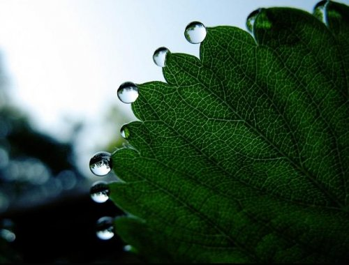 Когда растения плачут (14 фото)