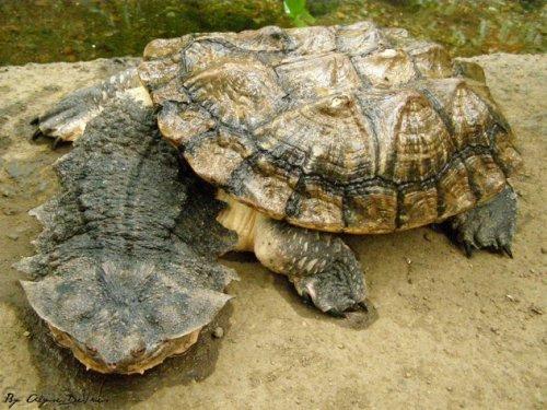 10 Ужасных и опасных черепах и ящериц