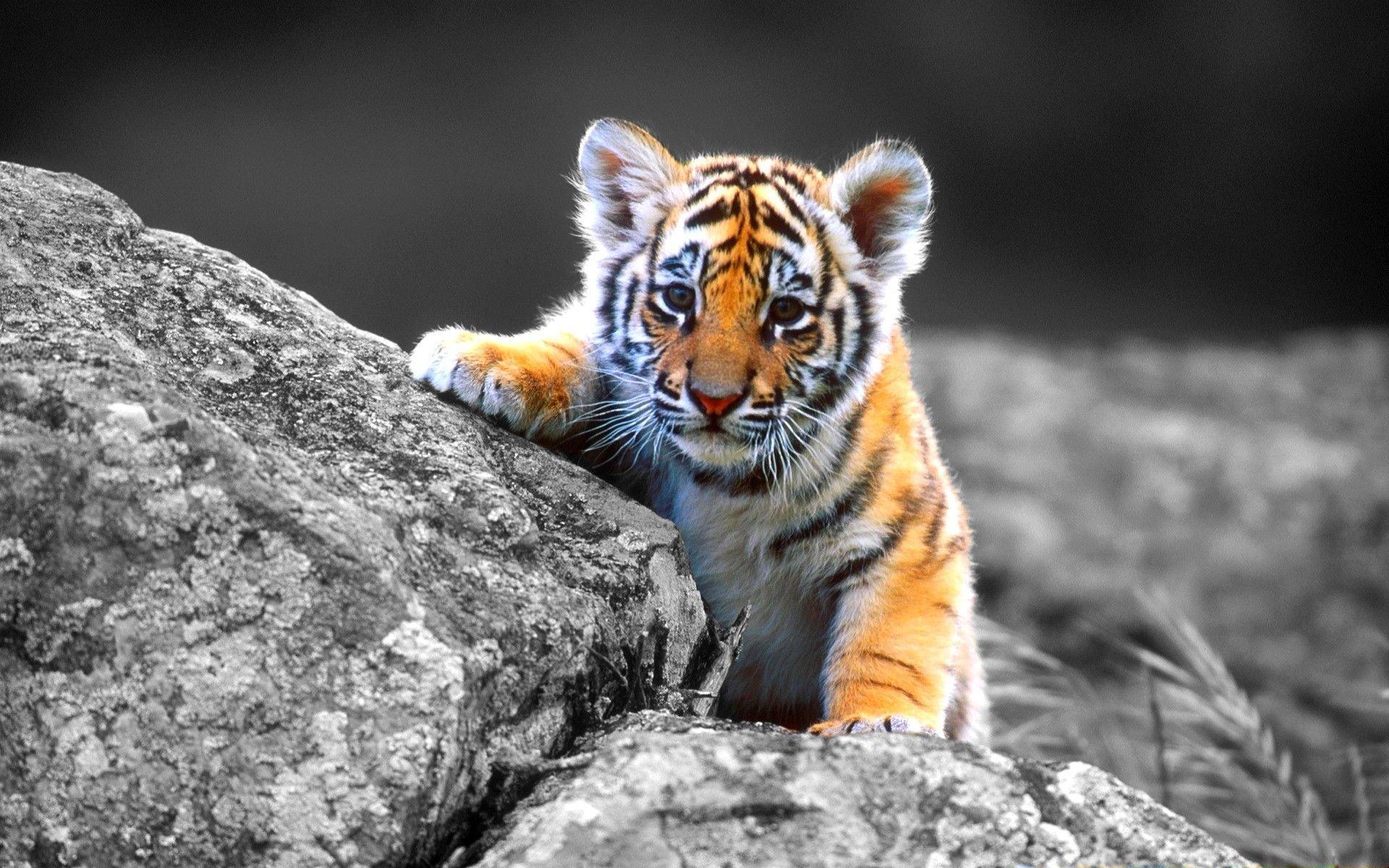 фотографии животных высокого разрешения реалии, которыми сегодня