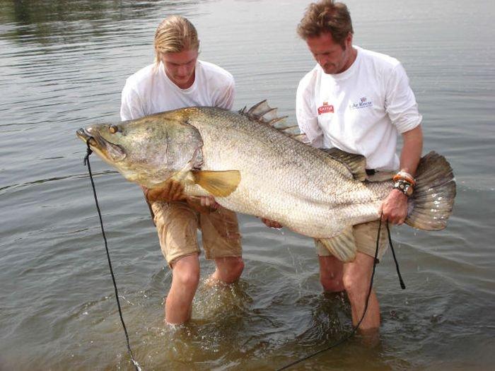 ловля ерша в пруду