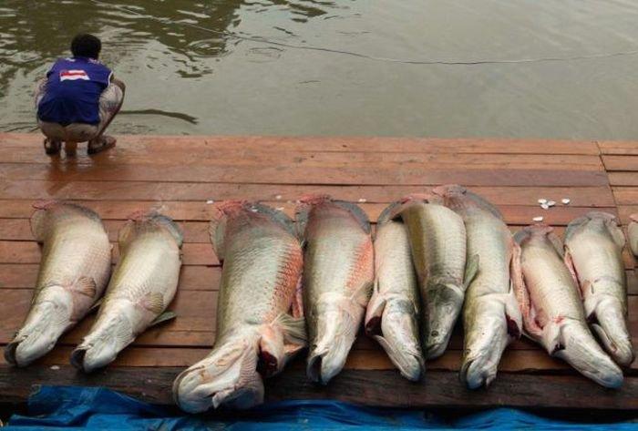 ужасные уловы рыбаков