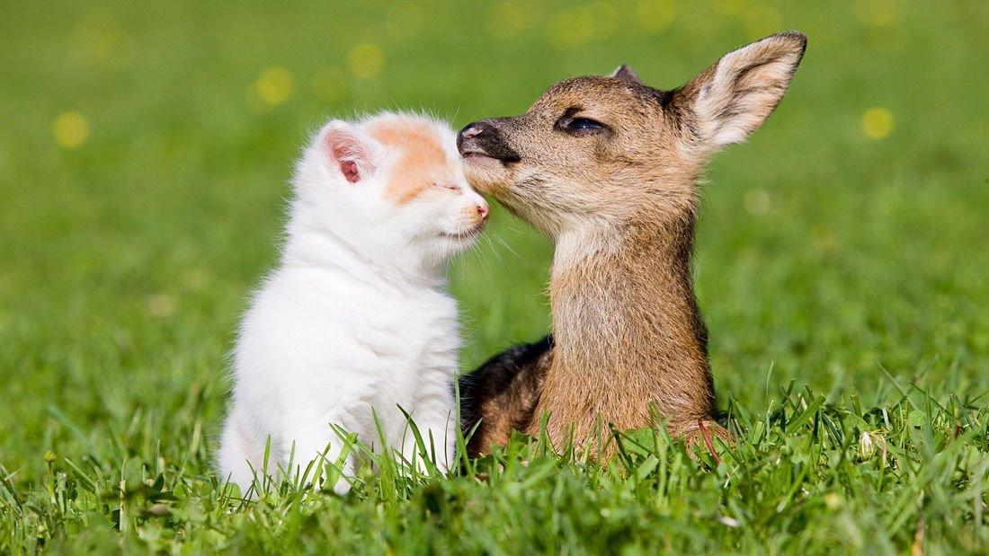 Cute Photos of Animal Moms and Babies  Animal Photos
