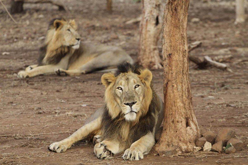 картинки индийских животных полугодие или