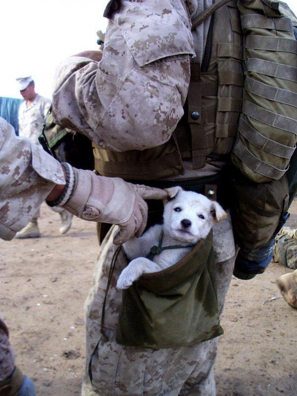 Доброта спасёт мир (19 фото)