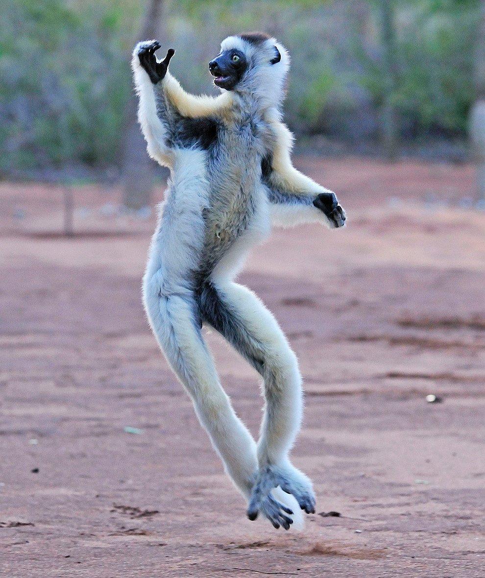 Танцоры смешные картинки
