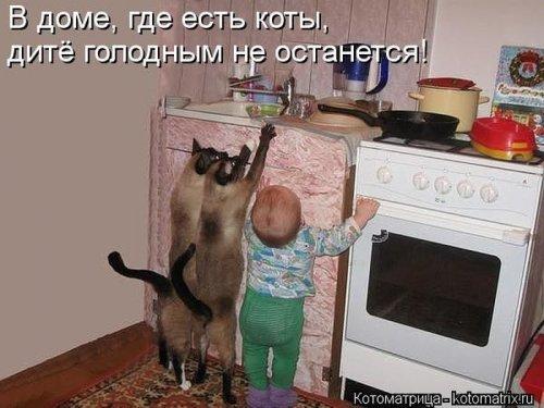 Свежий сборник котоматриц (32 шт)