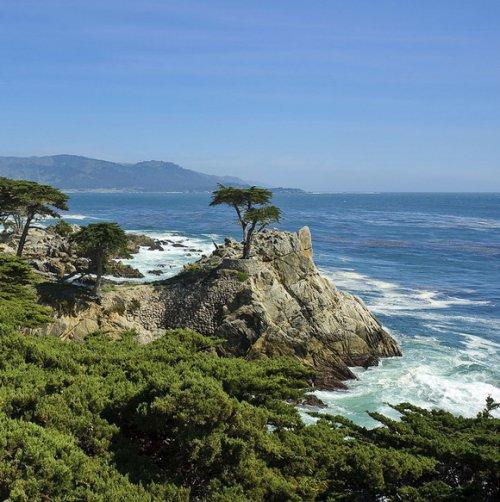 15 Знаменитых живых деревьев