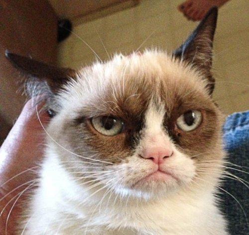Самые знаменитые коты в Интернете (6 фото + 3 видео)
