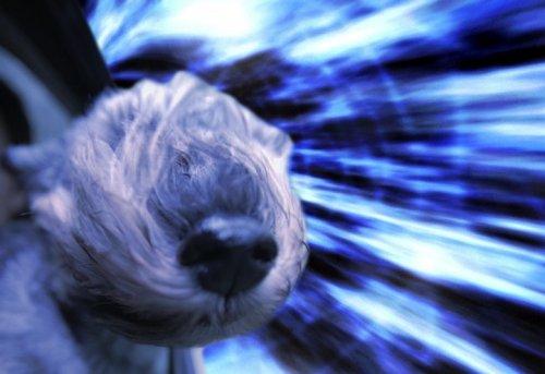 Собаки-путешественники в пространстве и времени (8 фото)