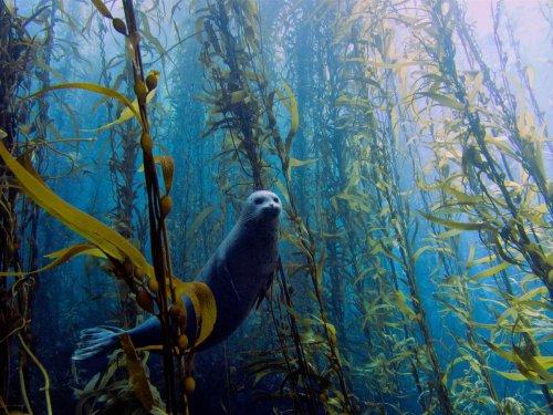 Победители конкурса подводной фотографии в Майами (13 шт)