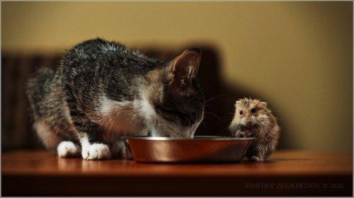 Животные-друзья (20 фото)