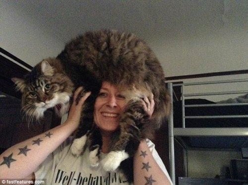Новая Интернет-забава Catfro (20 фото)