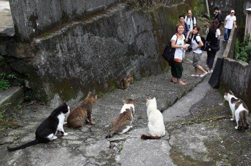 Деревня кошек Хотонь
