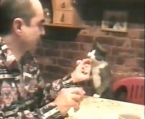 Котик просит кушать