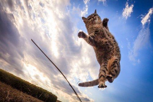 Летающие кошки в фотографиях Сэйдзи Мамия (13 шт)