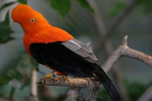 Топ-10 странно выглядящих птиц, кажущихся отфотошопленными