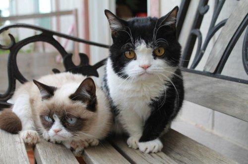 Про Grumpy Cat напишут книгу и снимут фильм (5 фото)