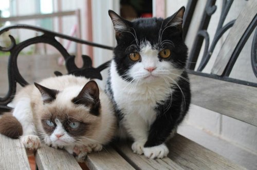 ��� Grumpy Cat ������� ����� � ������ ����� (5 ����)
