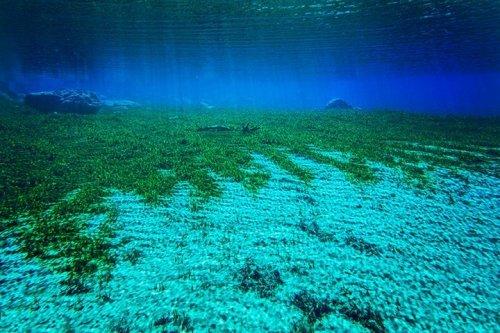 Кристально прозрачная вода Голубого озера в Новой Зеландии (11 фото)