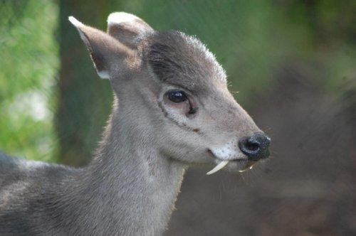 10 Редких животных со странными адаптациями