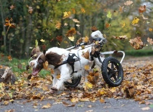 Самые счастливые собаки в Интернете (39 фото)