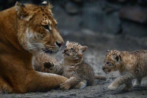 Животные-милахи (38 фото)
