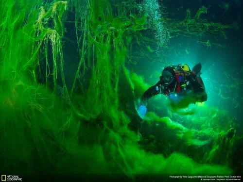 Июньская коллекция лучших фотографий от National Geographic (20 шт)