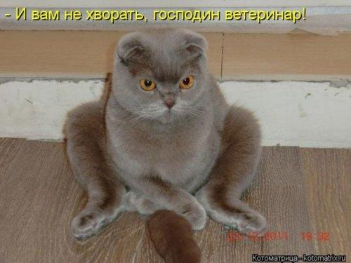 Новая котоматрица (32 шт)