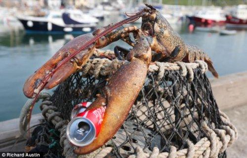 Идеальный омар под пиво для большой компании (4 фото)