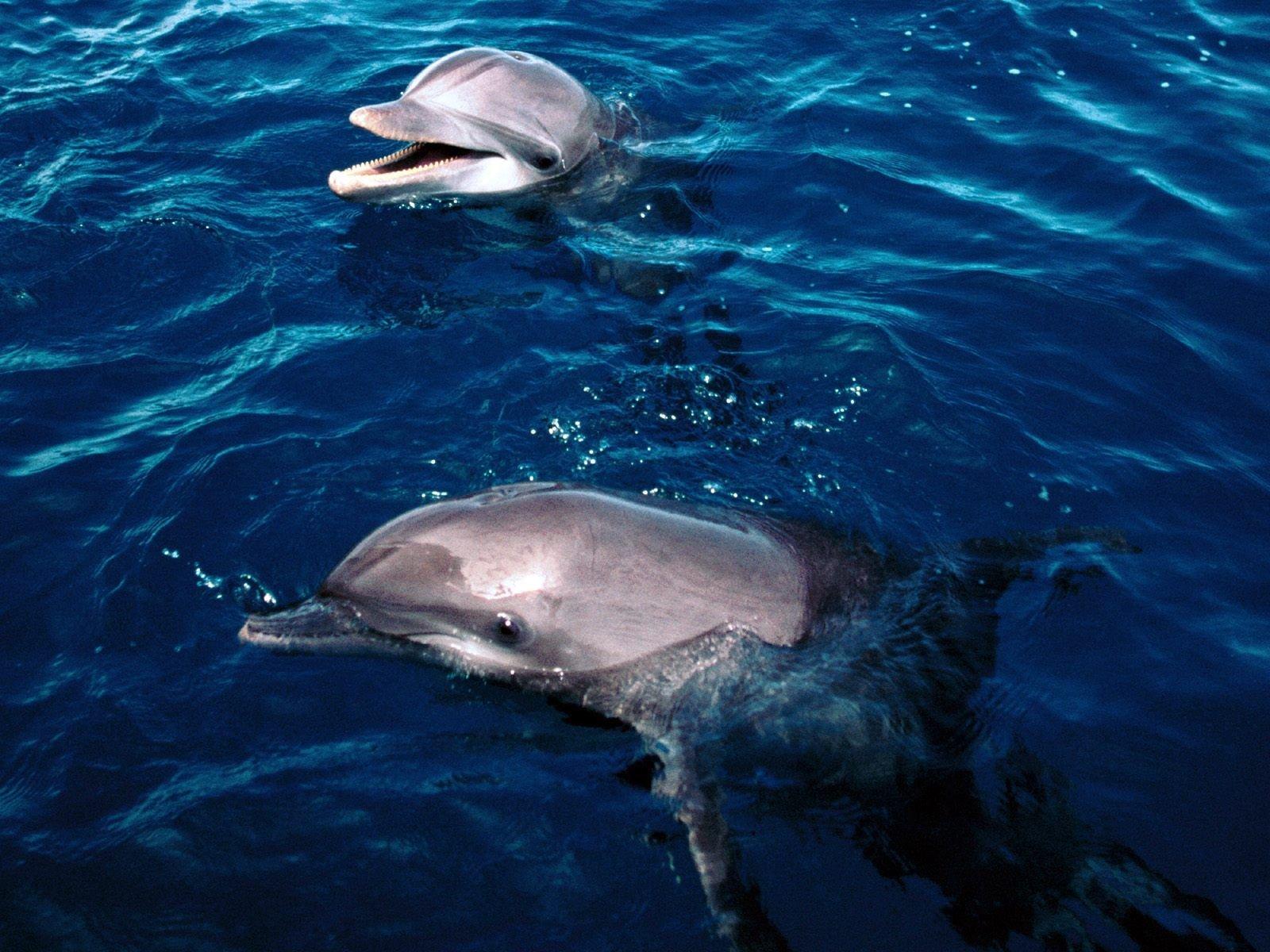 Дельфины получают удовольствие от секса
