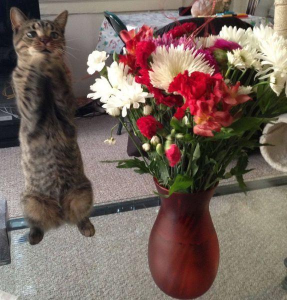 Приколы цветы