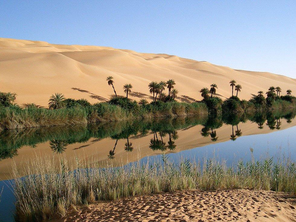 цветочный стебель оазисы в пустыне сахара фото выбираем самостоятельно, забывая