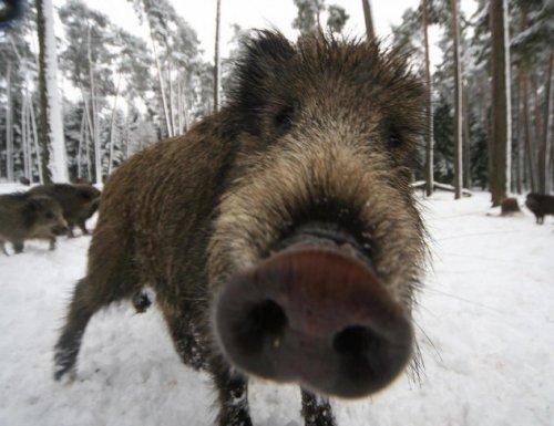 10 Самых что ни на есть свирепых или раздражительных животных