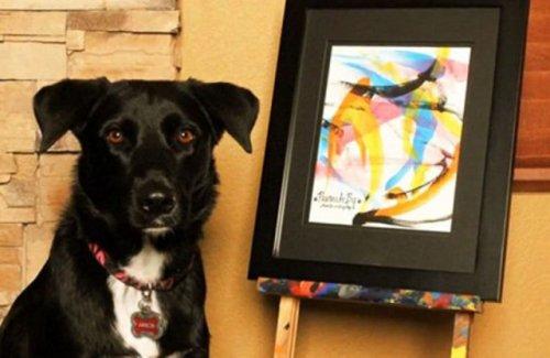 Пёс Арбор рисует картины, чтобы помочь бездомным животным (8 фото + 1 видео)