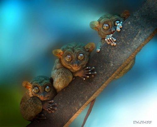 Очаровательные трио из животного мира (33 фото)