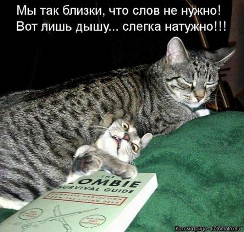 Новая порция котоматриц (28 шт)