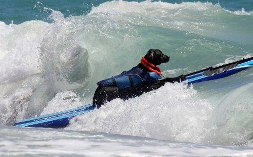 В Уэст-Палм-Бич впервые прошёл чемпионат по сёрфингу среди собак (18 фото)