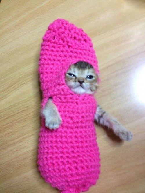 Малышка Васаби-чан в очаровательных нарядах – самый популярный котёнок в Японии (21 фото)