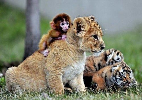 Умилительные животные (37 фото)