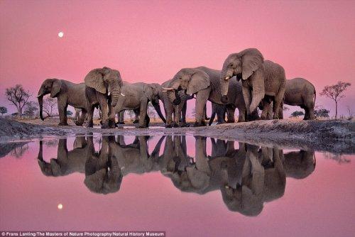 """Великолепные фотографии, вошедшие в книгу """"Мастера фотографии дикой природы""""  (9 фото)"""