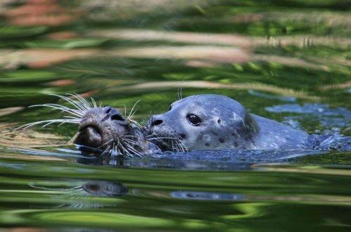 Мир животных в фотографиях (17 шт)