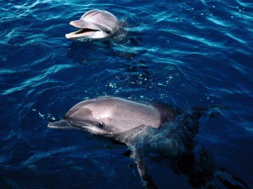 День дельфинов и китов