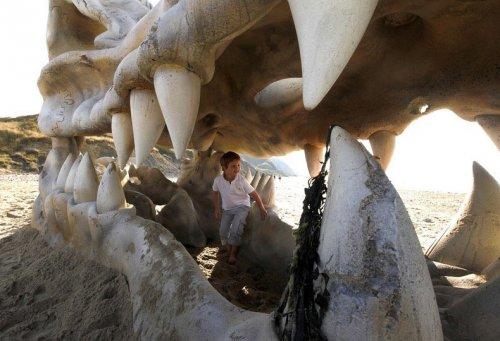 Огромный череп дракона на английском пляже (9 фото)