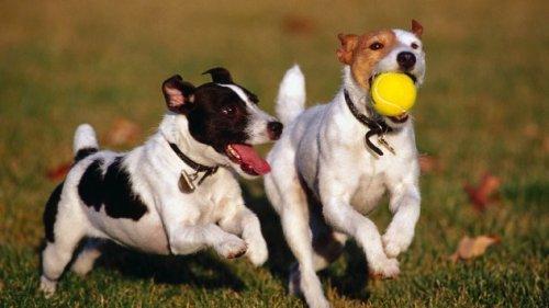10 Странных фактов о собаках